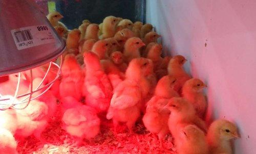 Laisser ouvert les magasins d'alimentation animal