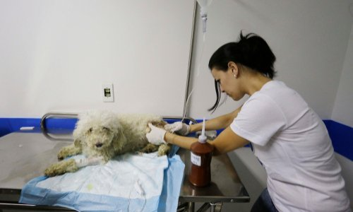 Interdire l'euthanasie de complaisance, aux vétérinaires.