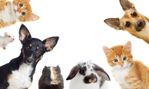 La Société protectrice des animaux qui refuse de prendre en charge des chiens