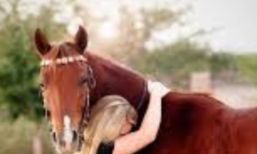 Accès aux chevaux en pension pendant confinement !