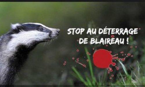 Vénerie sous terre : Non à la période complémentaire en Meurthe et Moselle, non aux périodes de chasse étendues !