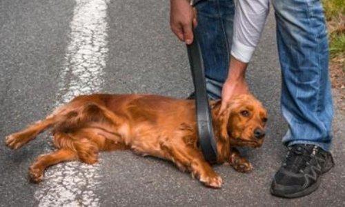 Création d'une Fédération afin de contrer les lobbys de la cruauté animale.