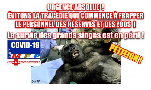 Covid 19 : Urgence absolue ! Évitons la tragédie qui commence à frapper le personnel des réserves et des zoos !