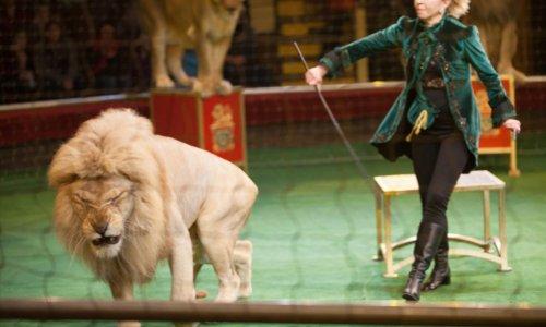 Pétition : Contre la présence d'animaux dans les cirques !
