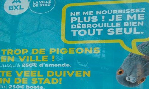 Pétition : Bruxelles : Non à la régulation des pigeons par famine imposée. Oui à la régulation douce