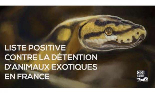 Contre la détention des animaux sauvages chez les particuliers : la Liste Positive !