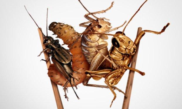 Pour empêcher les ventes d'insectes !