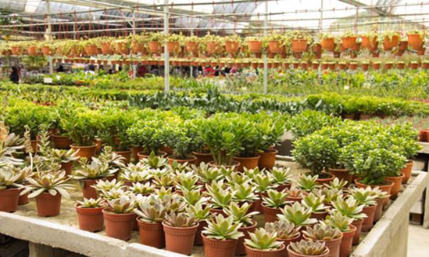 Pétition : Pour l'ouverture des pépinières et le droit de vendre leur production de plantes et arbustes par les pépiniéristes