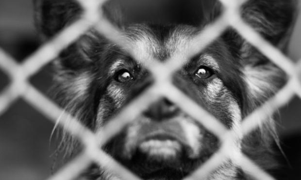 Fichage des personnes qui abandonnent et maltraitent les animaux