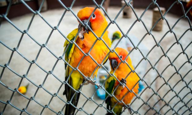 Les zoos et parcs animaliers ne sont pas des prisons pour animaux : Libérons les oiseaux du parc de Villars-les-Dombes