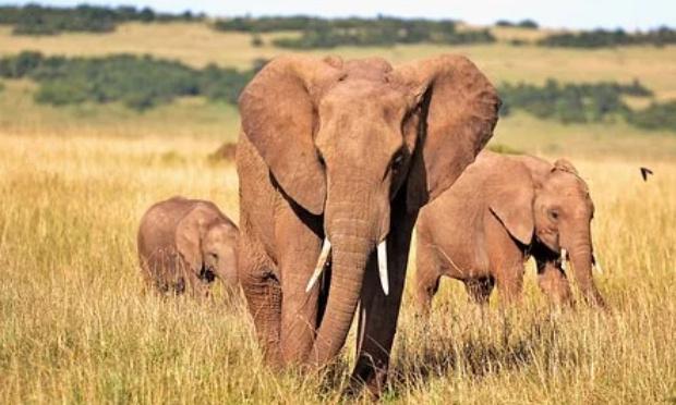 """Poèmes  """" Kimby"""" et """"Et la source tarie"""" pour lancer un SOS en  faveur des éléphants"""
