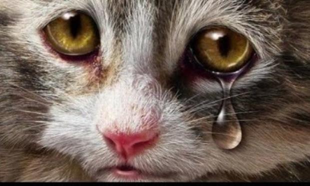 """Poème militant """"Pas de victime à déplorer"""" contre toutes formes de cruauté envers les animaux, pour un durcissement de la législation et pour une reconnaissance de l'animal en tant que """"personne"""""""
