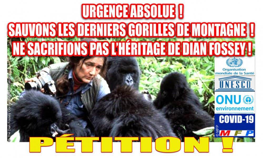 Covid-19 : Urgence absolue ! Sauvons les derniers gorilles de montagne ! Ne sacrifions pas l'héritage de Dian Fossey !