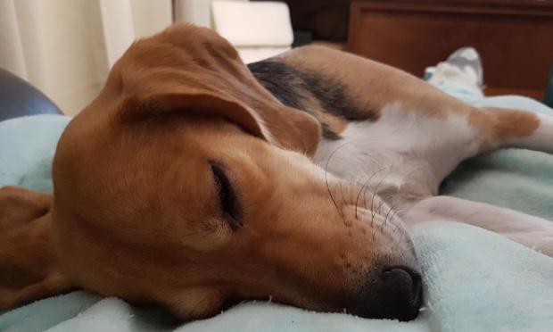Pétition : Demandons un droit de retraite obligatoire pour les animaux de laboratoire. Objectif euthanasie zéro !