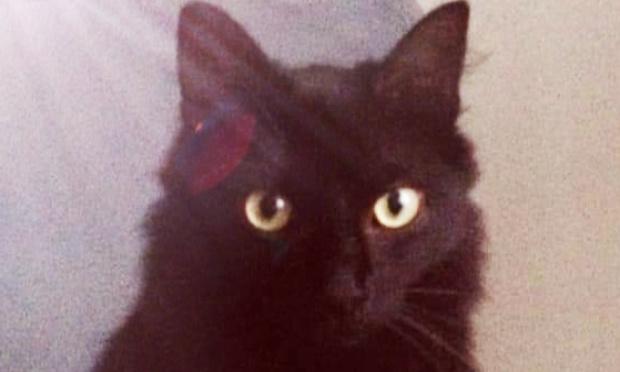 Pétition : Stopper l'empoisonneur de chats de Dinard