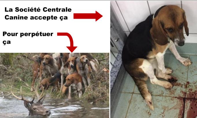 Pétition : Le lobby de la chasse gangrène la Société Centrale Canine: STOP!