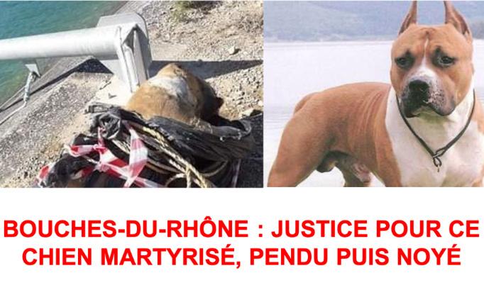 JUSTICE POUR CE CHIEN MARTYRISÉ, PENDU PUIS NOYÉ