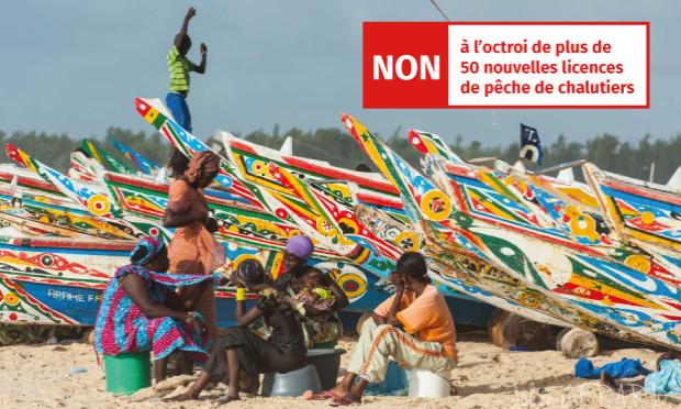 Pétition : Non à l'octroi de plus de 50 nouvelles licences de pêche de chalutiers au Sénégal