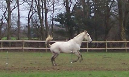 Igloo : pouvoir soigner les chevaux confinés depuis le 19 Mars