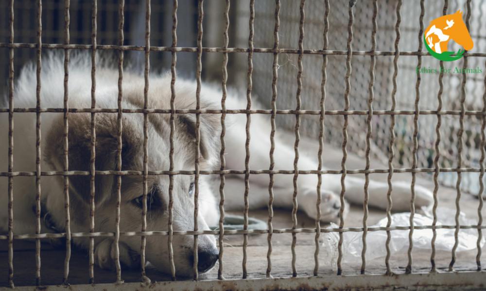 Pétition : Pour une aide d'urgence aux refuges et associations de Protection Animale durement touchés par le Covid19 et le confinement !