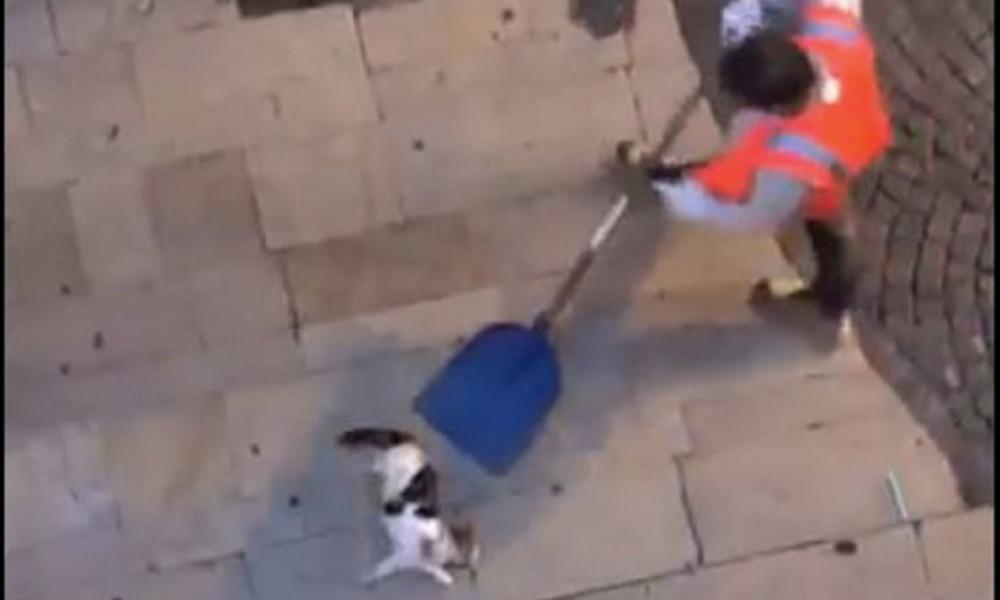 Pétition : Sanction exemplaire à l'encontre de l'agent de la société Véolia ayant balancé un chat blessé dans une remorque à ordures à Montélimar