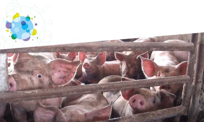 Pétition : Contre les pandémies, stoppons l'élevage industriel !