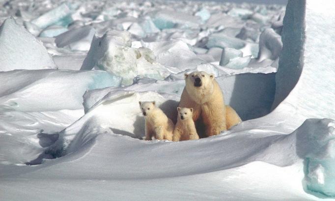 Naissance d'oursons polaires sur la Côte d'Azur : Vous trouvez cela magique ?