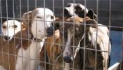 Pétition : Euthanasie de 51 chiens au refuge spa
