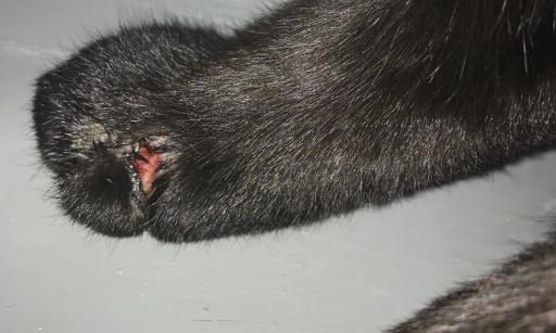 Justice pour mon chat Krokmou, 5 ans !