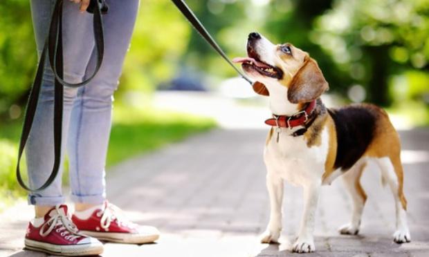 Pour la réouverture des services animaliers et parcs canins !