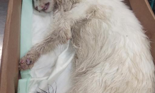 Ange 10 mois empoisonnée à la mort aux rats