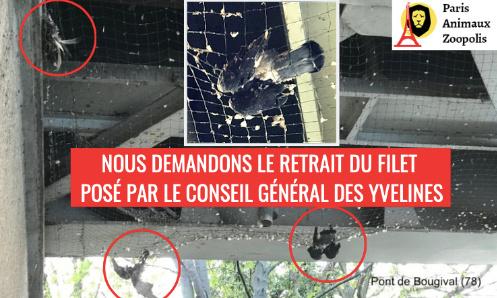 Demandons le retrait du filet qui tue des pigeons à Bougival (78)