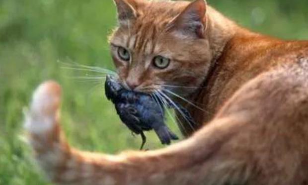 Soutient au piegeage des chats