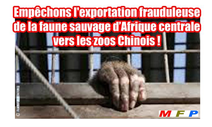 Pétition : Empêchons l'exportation frauduleuse de la faune sauvage d'Afrique centrale vers les zoos chinois !