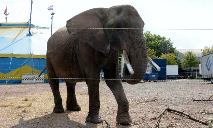 Pétition : Pour que l'éléphante Buba soit retirée du cirque et placée dans un sanctuaire! #FreeBuba