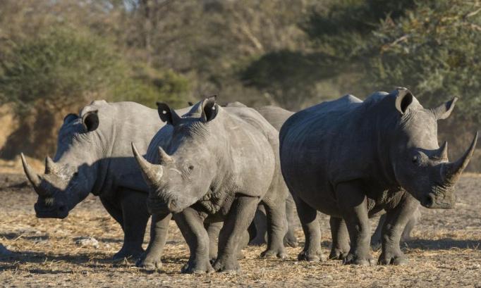 Pétition : Pour l'interdiction de la chasse au rhinocéros au Botswana !