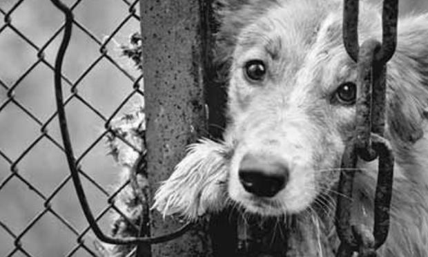 Agissons pour retirer les chiens de Timothy Duval