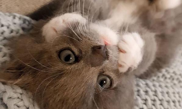 Je veux un chat