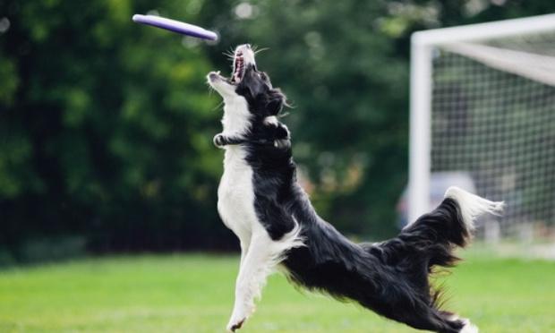 Création d'un parc canin à Vanves
