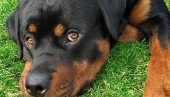 Pétition : Pour que l'Etat aide les Associations de Protection Animale