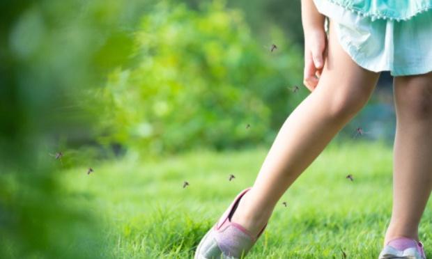 Stop les moustiques tigres