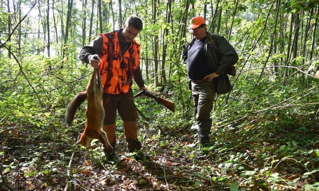 Massacre du renard ou blaireau