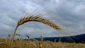 Pétition : Fonds de solidarité céréaliers – éleveurs : cultiver d'autres approches pour une agriculture durable