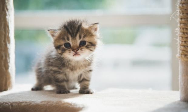 Stop aux ventes d'animaux de compagnie sur le site Le Bon Coin
