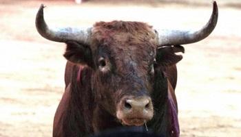 Pétition : Stop au monstrueux el toro jubilo