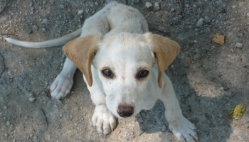 Stoppons la zoophilie en Allemagne Petition-img-9226