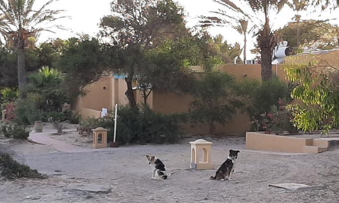 Stop à la maltraitance des chiens du Club Med Djerba