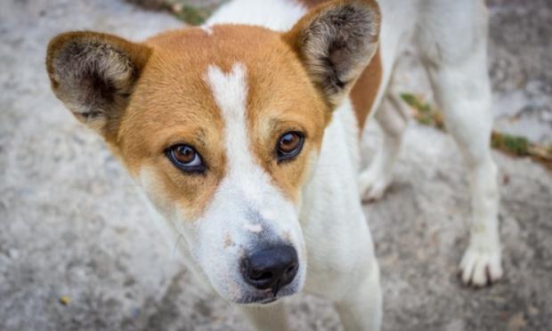 Arrêtez le trafic et la maltraitance des chiens