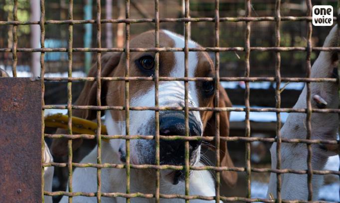 Non à l'élargissement des modalités de fourniture d'animaux aux laboratoires !