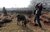 Pétition : Mettons fin aux monstreux sacrifices de Gadhimai